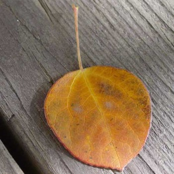 leaf_slides